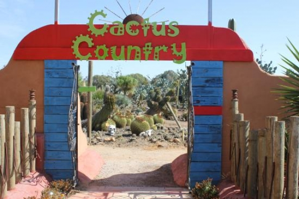 cactus-country_3-1